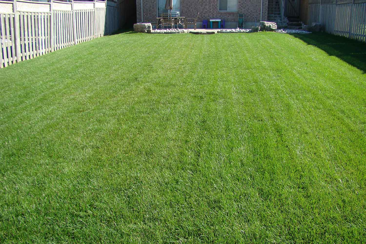 New Sod And Lawns Installation Repair And Replacement