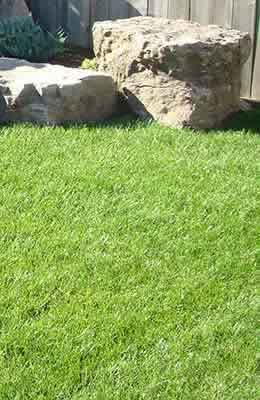 A repaired lawn with new sod.